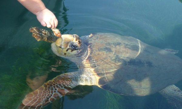 Schildpaddenstrand Dalyan vanuit Marmaris icmeler